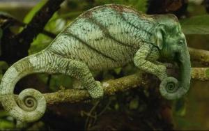 faux-animaux-hybrides-invente-fake-photoshop-20-300x188 Zoologie hybride et nouvelles espèces d'animaux