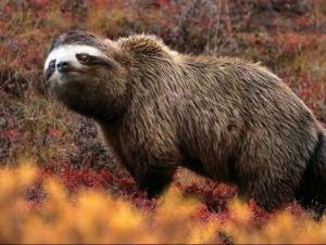 faux-animaux-hybrides-invente-fake-photoshop-21-1-300x226 Zoologie hybride et nouvelles espèces d'animaux
