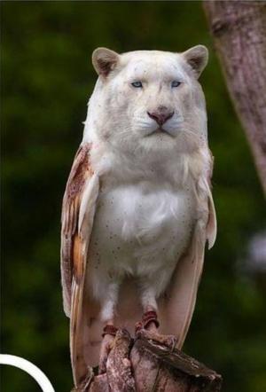 faux-animaux-hybrides-invente-fake-photoshop-22-300x442 Zoologie hybride et nouvelles espèces d'animaux