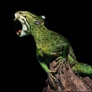 faux-animaux-hybrides-invente-fake-photoshop-23-300x298 Zoologie hybride et nouvelles espèces d'animaux