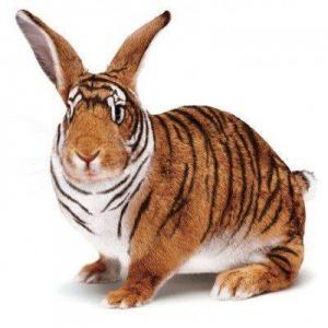 faux-animaux-hybrides-invente-fake-photoshop-26-1-300x300 Zoologie hybride et nouvelles espèces d'animaux
