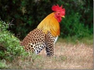 faux-animaux-hybrides-invente-fake-photoshop-27-300x225 Zoologie hybride et nouvelles espèces d'animaux