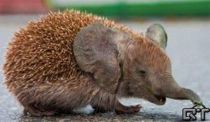 faux-animaux-hybrides-invente-fake-photoshop-28-2-1-300x174 Zoologie hybride et nouvelles espèces d'animaux