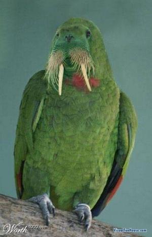 faux-animaux-hybrides-invente-fake-photoshop-29-300x467 Zoologie hybride et nouvelles espèces d'animaux