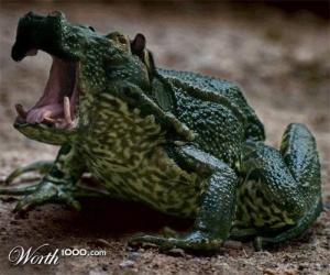 faux-animaux-hybrides-invente-fake-photoshop-3-300x250 Zoologie hybride et nouvelles espèces d'animaux