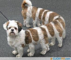 faux-animaux-hybrides-invente-fake-photoshop-32-300x255 Zoologie hybride et nouvelles espèces d'animaux