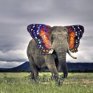 faux-animaux-hybrides-invente-fake-photoshop-36-300x300 Zoologie hybride et nouvelles espèces d'animaux