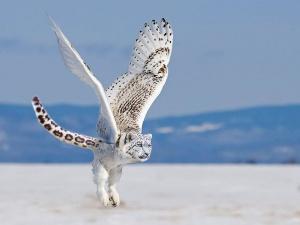 faux-animaux-hybrides-invente-fake-photoshop-37-300x225 Zoologie hybride et nouvelles espèces d'animaux