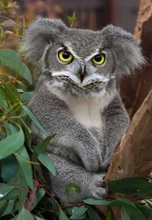 faux-animaux-hybrides-invente-fake-photoshop-39-300x436 Zoologie hybride et nouvelles espèces d'animaux