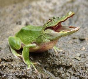 faux-animaux-hybrides-invente-fake-photoshop-4-2-1-300x268 Zoologie hybride et nouvelles espèces d'animaux