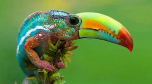 faux-animaux-hybrides-invente-fake-photoshop-41-300x167 Zoologie hybride et nouvelles espèces d'animaux