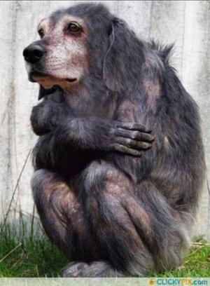 faux-animaux-hybrides-invente-fake-photoshop-48-300x408 Zoologie hybride et nouvelles espèces d'animaux