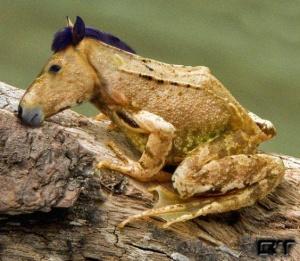 faux-animaux-hybrides-invente-fake-photoshop-49-300x261 Zoologie hybride et nouvelles espèces d'animaux