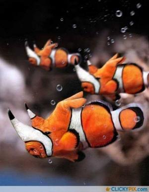 faux-animaux-hybrides-invente-fake-photoshop-52-300x386 Zoologie hybride et nouvelles espèces d'animaux