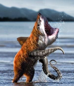 faux-animaux-hybrides-invente-fake-photoshop-54-300x346 Zoologie hybride et nouvelles espèces d'animaux