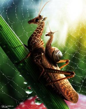 faux-animaux-hybrides-invente-fake-photoshop-59-1-300x379 Zoologie hybride et nouvelles espèces d'animaux