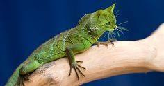 faux-animaux-hybrides-invente-fake-photoshop-61 Zoologie hybride et nouvelles espèces d'animaux