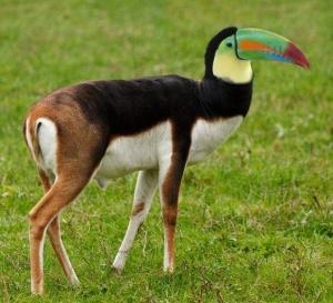 faux-animaux-hybrides-invente-fake-photoshop-64-300x273 Zoologie hybride et nouvelles espèces d'animaux