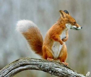 faux-animaux-hybrides-invente-fake-photoshop-67-300x256 Zoologie hybride et nouvelles espèces d'animaux