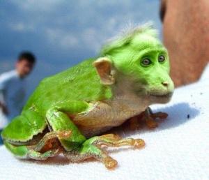 faux-animaux-hybrides-invente-fake-photoshop-70-300x258 Zoologie hybride et nouvelles espèces d'animaux