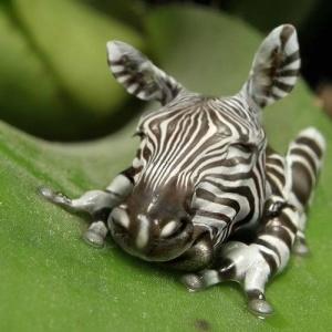 faux-animaux-hybrides-invente-fake-photoshop-71-300x300 Zoologie hybride et nouvelles espèces d'animaux