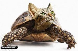 faux-animaux-hybrides-invente-fake-photoshop-72-300x199 Zoologie hybride et nouvelles espèces d'animaux
