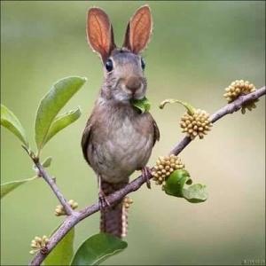 faux-animaux-hybrides-invente-fake-photoshop-75-300x300 Zoologie hybride et nouvelles espèces d'animaux