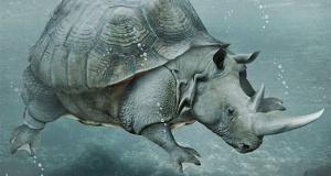 faux-animaux-hybrides-invente-fake-photoshop-76-300x160 Zoologie hybride et nouvelles espèces d'animaux