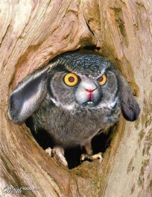 faux-animaux-hybrides-invente-fake-photoshop-79-1-300x389 Zoologie hybride et nouvelles espèces d'animaux