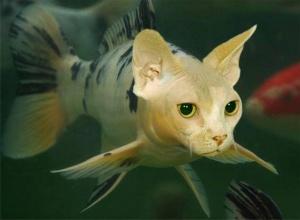 faux-animaux-hybrides-invente-fake-photoshop-81-1-300x220 Zoologie hybride et nouvelles espèces d'animaux