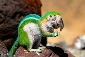 faux-animaux-hybrides-invente-fake-photoshop-82-300x200 Zoologie hybride et nouvelles espèces d'animaux