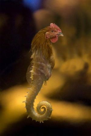 faux-animaux-hybrides-invente-fake-photoshop-84-300x450 Zoologie hybride et nouvelles espèces d'animaux