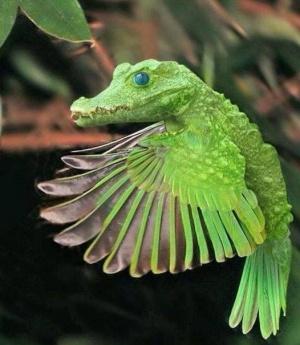 faux-animaux-hybrides-invente-fake-photoshop-89-1-300x345 Zoologie hybride et nouvelles espèces d'animaux