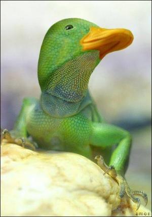 faux-animaux-hybrides-invente-fake-photoshop-95-300x430 Zoologie hybride et nouvelles espèces d'animaux