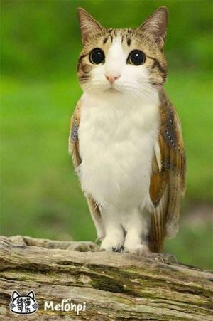 faux-animaux-hybrides-invente-fake-photoshop-96-300x451 Zoologie hybride et nouvelles espèces d'animaux