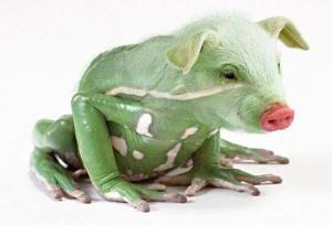 faux-animaux-hybrides-invente-fake-photoshop-97-300x204 Zoologie hybride et nouvelles espèces d'animaux