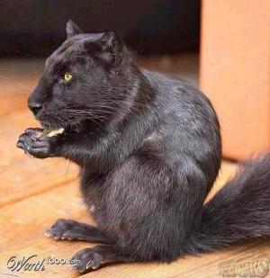 faux-animaux-hybrides-invente-fake-photoshop-99-300x309 Zoologie hybride et nouvelles espèces d'animaux