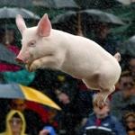 """lancer-de-cochon-porc-vole-volant-flying-pig-1-150x150 Europe : Mise en place d'une taxe """"VÉGAN"""" pour sauver les métiers de la viande"""