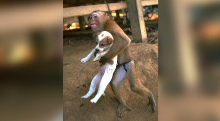 Attentat en Somalie : un singe qui sauve un petit chien
