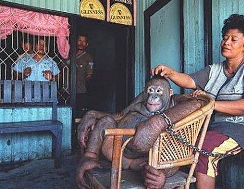 00-prostitution-orang-outan-singe-1 Zoophilie en France : un restaurant vietnamien prostituait un orang-outan dans la cave de l'établissement