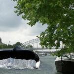 baleine-seine-paris-150x150 Johnny Hallyday toujours vivant dans un endroit tenu secret ? Rumeur et enquête