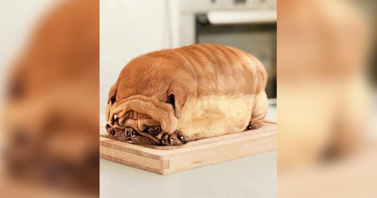 Le pain de chien : la nouvelle et cruelle tendance gastronomique en Chine