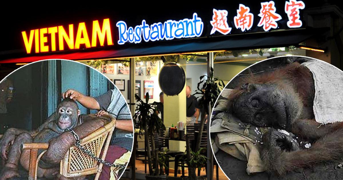 Zoophilie en France : un restaurant vietnamien prostituait un orang-outan dans la cave de l'établissement
