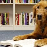 chien-lire-japon-150x150 L'incroyable histoire de Marcel, cet ours qui apprend à lire à et à écrire à des analphabètes précarisés