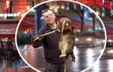 Des rats géants découverts dans la cuisine du Fouquet's à Paris