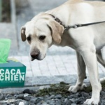 caca-de-chien-mouchoirs-150x150 Horreur à Alep : HRW dénonce l'utilisation de bombes fécales et les largages d'excréments par Canadair