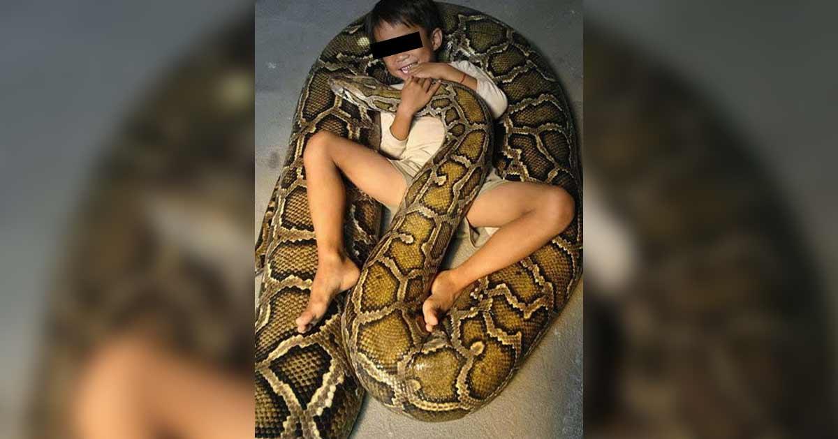 Un enfant de 12 ans élevé et nourri par des serpents depuis sa naissance