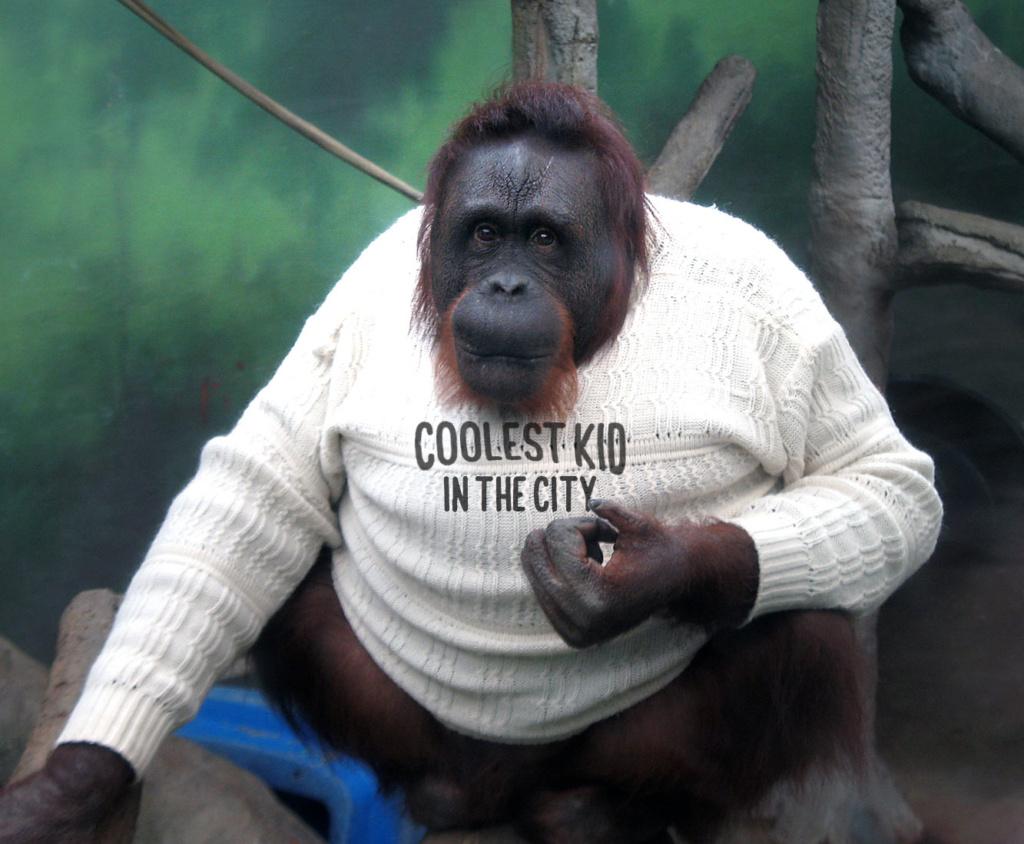 hm-remplace-lenfant-vrai-singe-sweat-shirt-juge-raciste-1024x844 H&M remplace l'enfant par un vrai singe sur le sweat-shirt jugé raciste