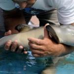 dauphin-bebe-piscine-150x150 Emmanuel et Brigitte Macron ont adopté un poisson, baptisé Medor