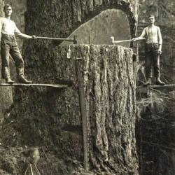 On m'apprend à l'instant que Igor Sokarin et Vladimir Rostov, deux bûcherons russes, viennent de terminer d'abattre un arbre qu'ils avaient entamé en 1932 ! Bravo, quelle patience, quelle pugnacité !